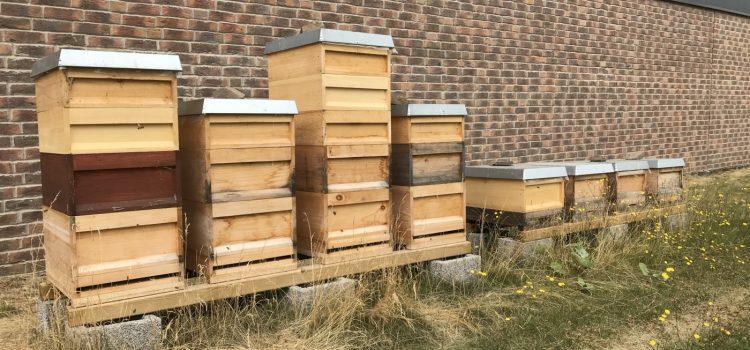 Neues von den Bienen vom Heinenhof