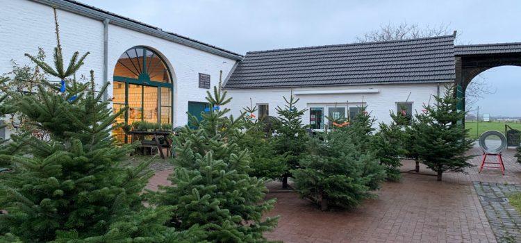 Weihnachtsbaumverkauf auf dem Heinenhof